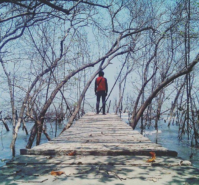 Keindahan Alam Wisata Hutan Mangrove Mojo