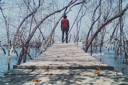 Keindahan Alam Wisata Hutan Mangrove Mojo Pemalang