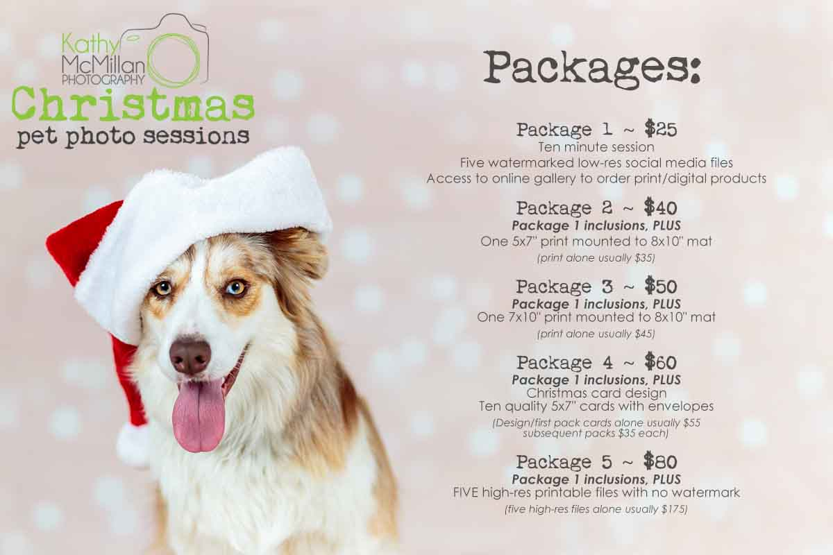 Brisbane Christmas Pet Photo Sessions Announced ... | Australian Dog ...