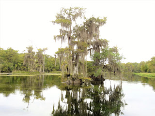 Natur in Edward Ball Wakulla Springs State Park, Florida USA