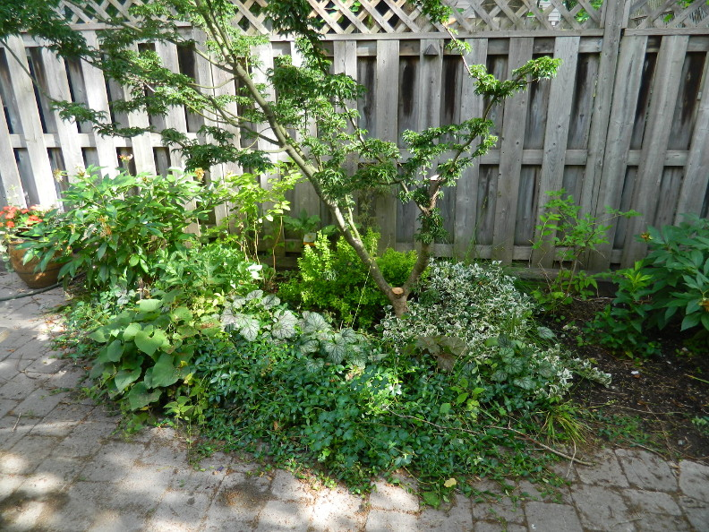 Garden Muses Not Another Toronto Gardening Blog Cabbagetown