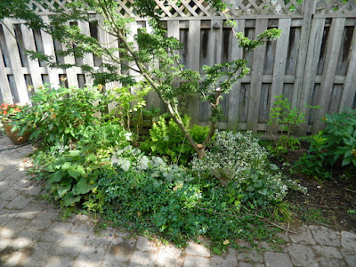 Cabbagetown Toronto shade garden makeover before by Paul Jung Gardening Services