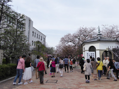 大阪造幣局 桜の通り抜け
