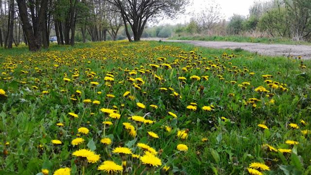 Żółto-zielono w Krakowie