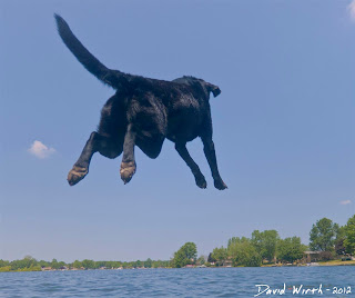 dog jumping off dock into water