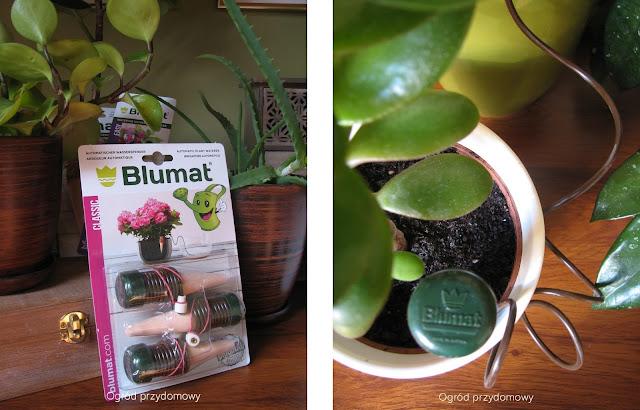 rośliny doniczkowe, ogród przydomowy