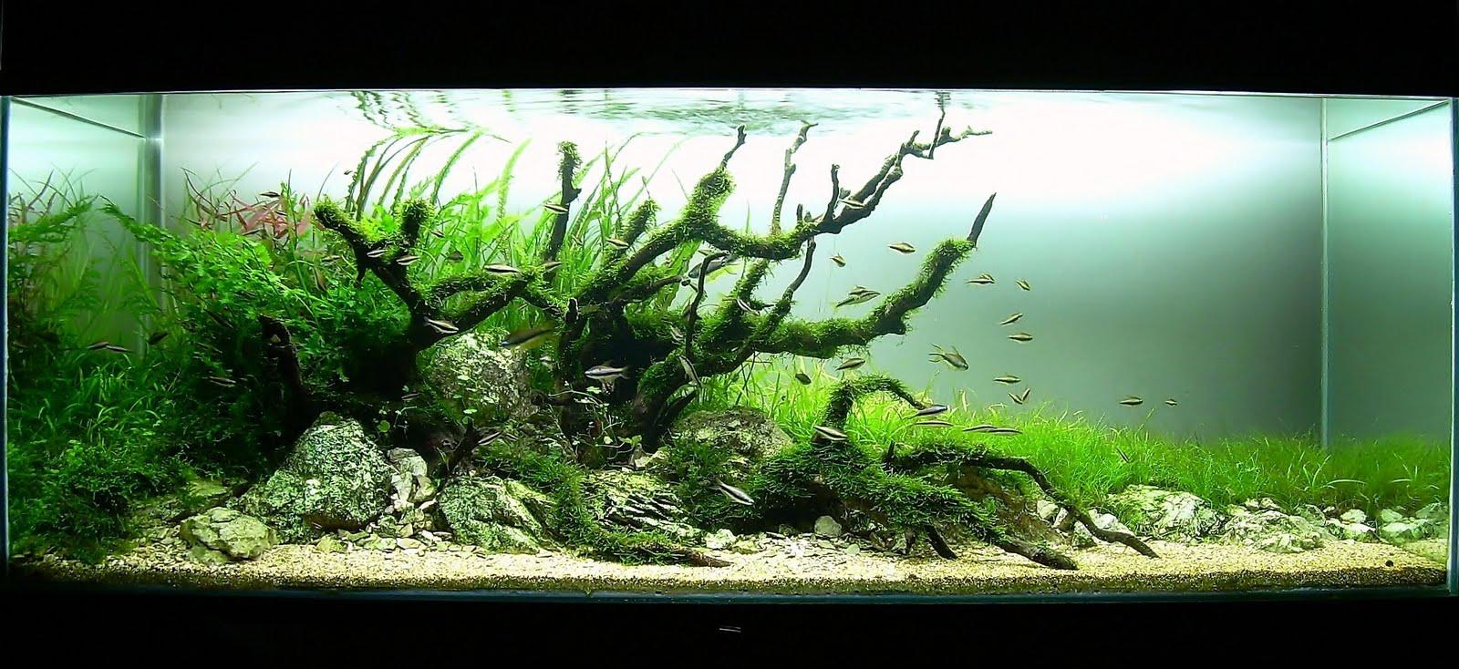 Ushi kouge aquascaping i miei acquari for Fondo acquario