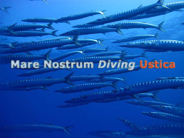 mare nostrum diving ustica