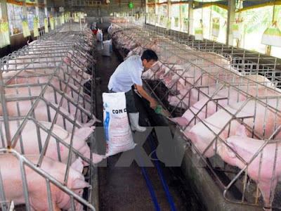 Giá thịt heo có xu hướng tăng nhẹ. Ảnh: Mạnh Linh/TTXVN