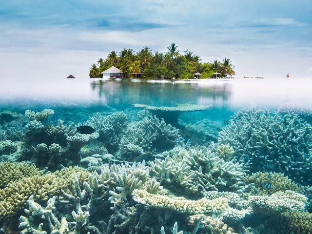 Ấn Độ, thiên đường lặn biển ngắm san hô