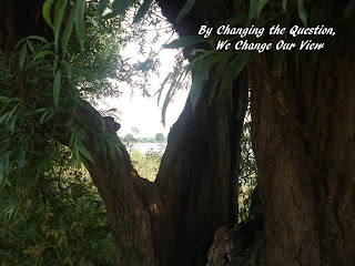 Image of looking through the split trunk of a tree to light over a lake with text: By changing the question, we change our view.