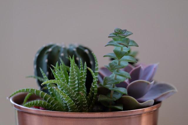 DIY-Home Decor via indoor plants photo
