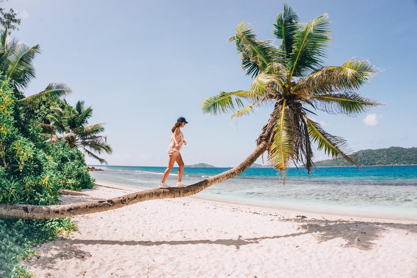 travel blog, Seychelles, Seychelles island, palm tree, Seychelles travel, travel cost to Seychelles, lifestyle blog, travel blog, thedailywonders, polishgirl, travel girl