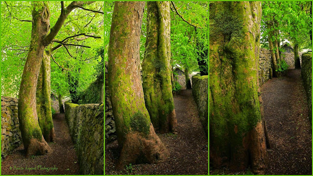 collage with images from the The Waterfall Walk in Oughterard, Galway, Ireland