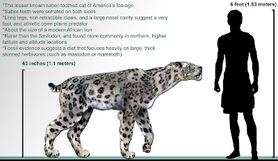 Homotherium compared to human. That's a big cat!