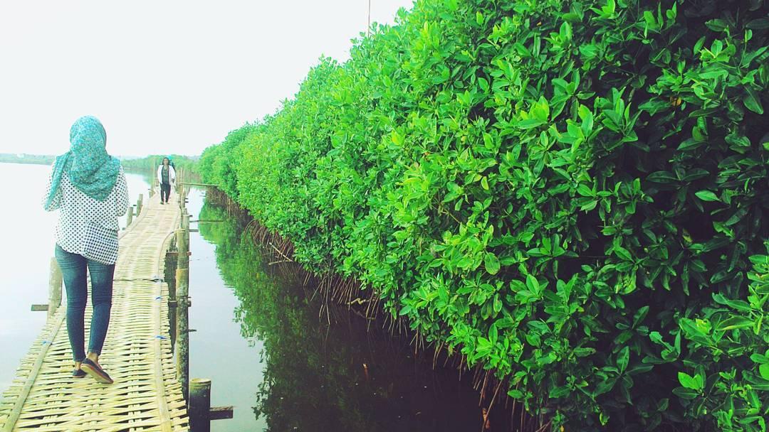Hutan Mangrove Pantai Congot ~ Keunikan Wisata Bahari - Training77 l 085292286625
