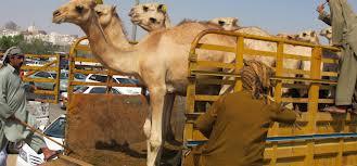 http://4.bp.blogspot.com/-Om5S8w4Ca7U/UIcZlidE9HI/AAAAAAAAAlE/n5ynJILXvs4/s1600/qurban+makkah.jpeg