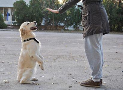 perro adiestramiento