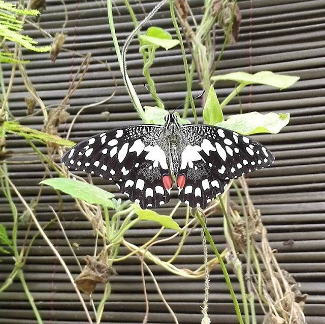 A Visit to Butterflies Gardens  in Vannes I Brittany I France I Travelling Hopper I