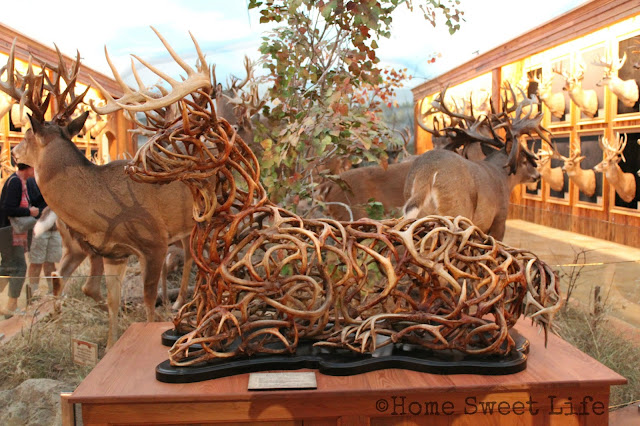 Wonders of Wildlife, Johnny Morris, Wildlife Galleries, Springfield MO, road trip, family trip, Bass Pro Shops, bucks and bulls room