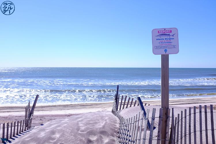 Le Chameau Bleu -  Dune de Fire Island - Séjour à Long Island New York
