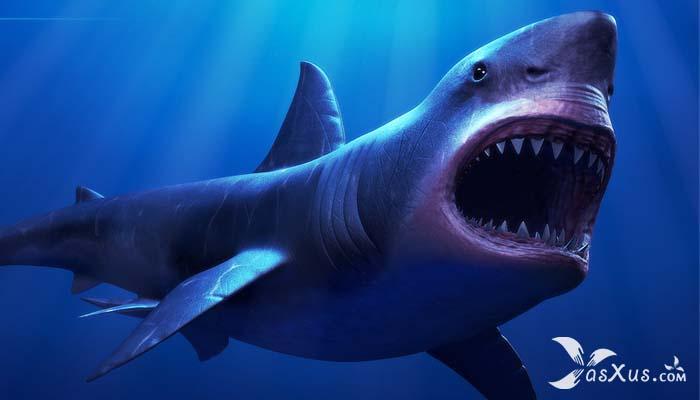21 Ikan Hiu Terbesar di Dunia Yang Masih Hidup dan Pernah Ditemukan