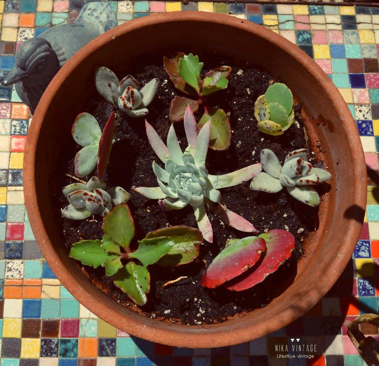 diy, jardin, maceta, tiesto, cactus, crasas, suculentas, sustrato,plantar, decoracion