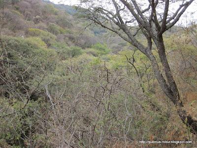 Barranco por donde pasa el arroyo temporal el Zapote.