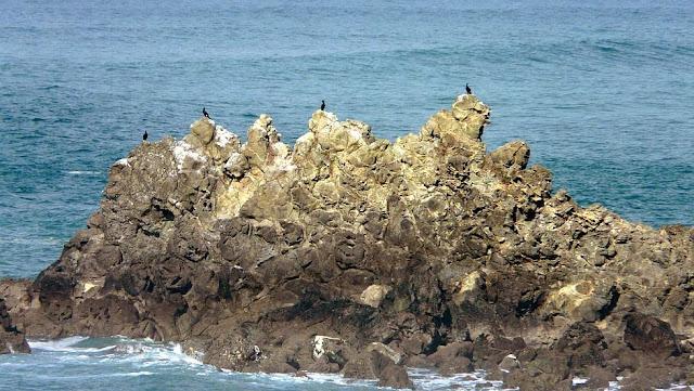 cormoranes monudos sobre las rocas menakoz