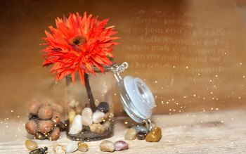 Wallpaper: Fabric Flower and Stones