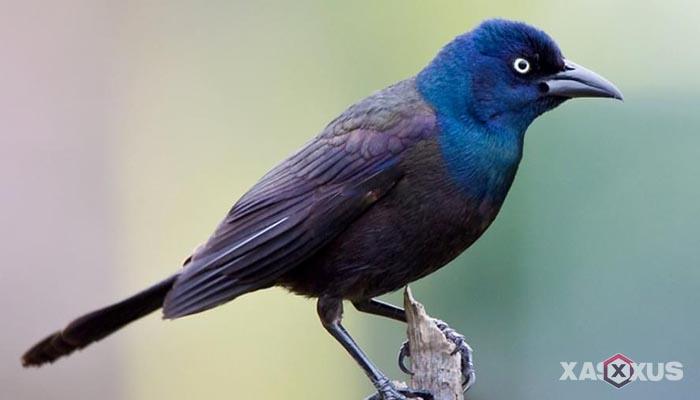 Hewan yang berkembang biak dengan cara bertelur - Burung