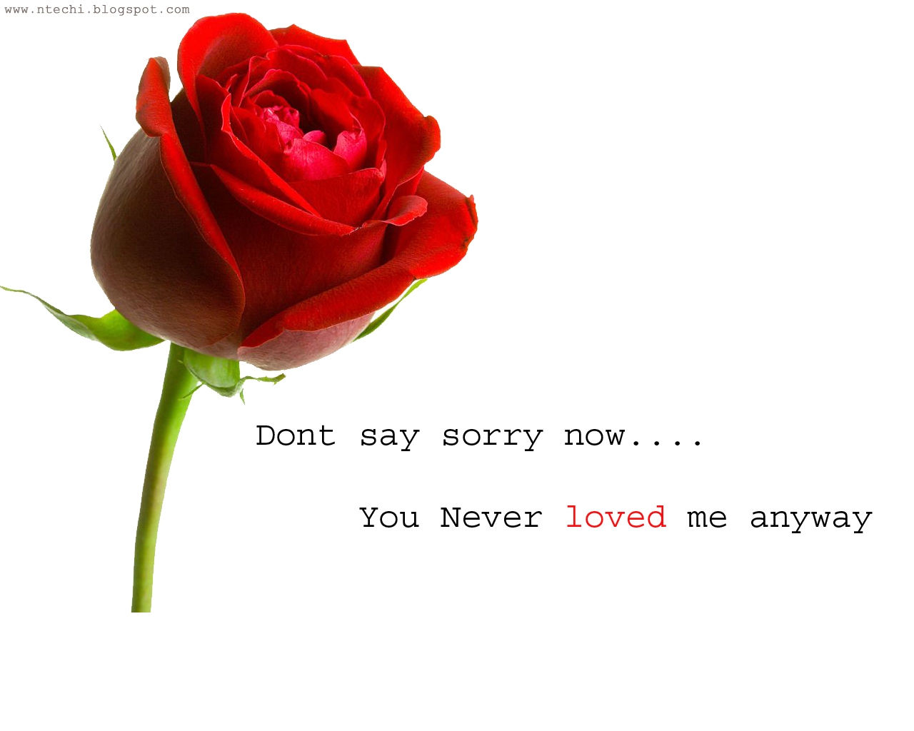 Sorry images hd for love adsleaf newmagazine dont say sorry now you never loved me anyway images sorry pichers hd thecheapjerseys Image collections