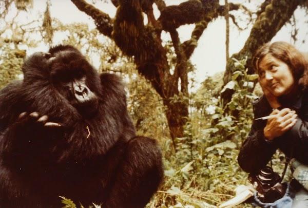 Dian Fossey y sus Gorilas en la Niebla