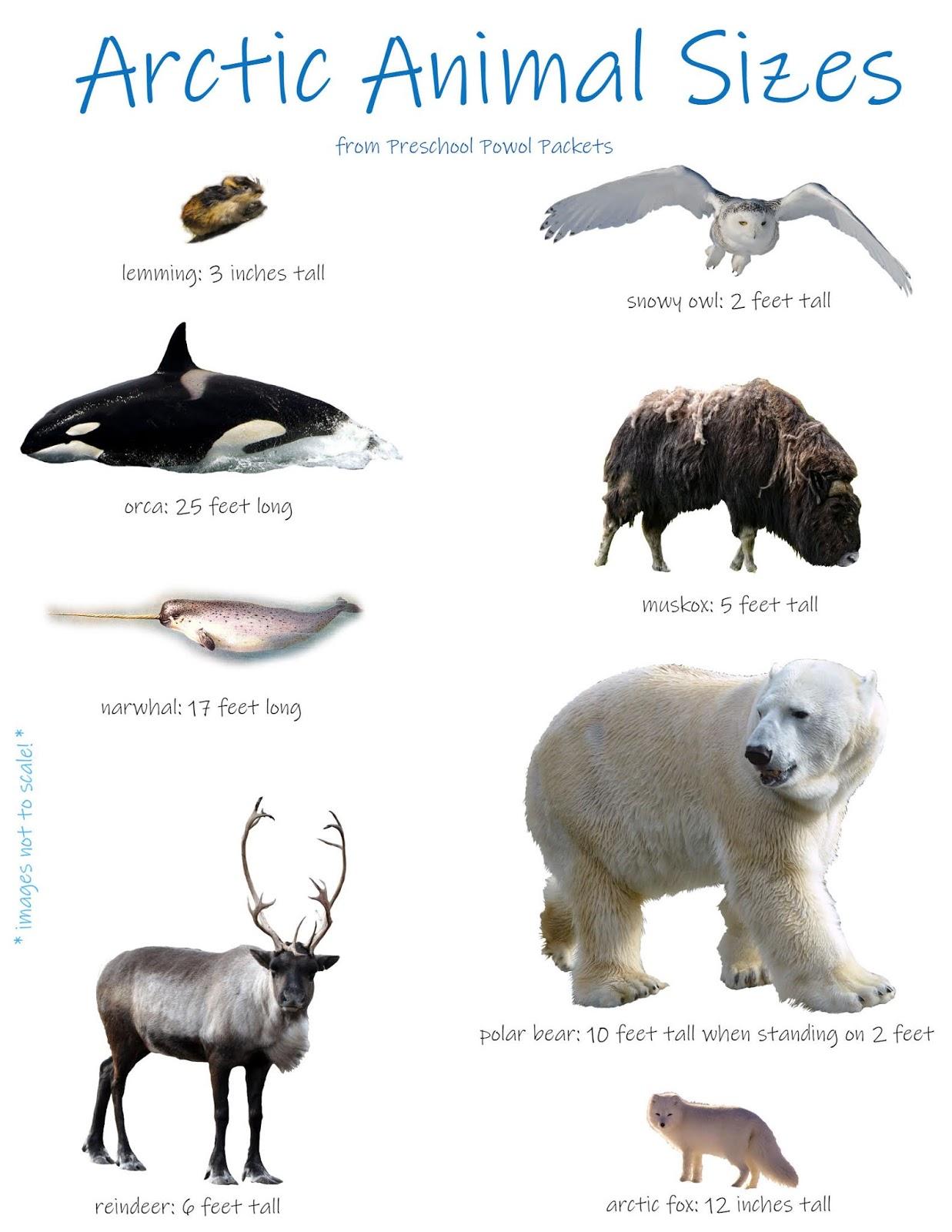 Arctic Animals Math Measurement Activity