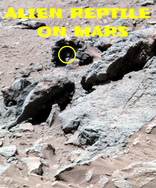 Alien looking anomaly on Mars could be a Reptile.