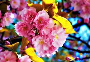 HD Flower Live Wallpaper