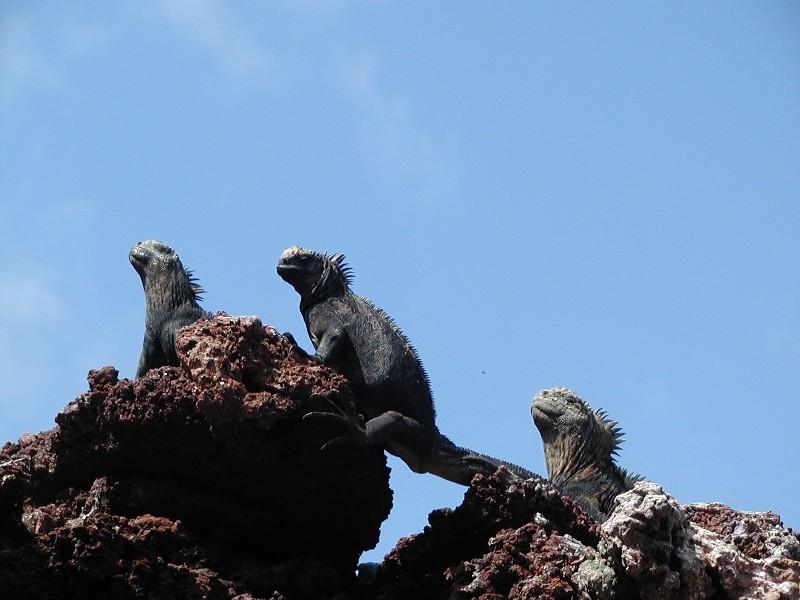 Isla San Cristóbal - Galápagos