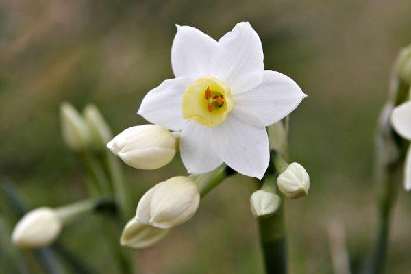 hoa thuy tien 3