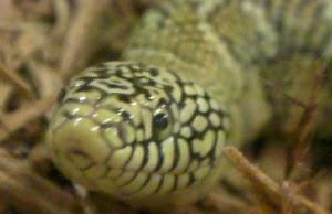 Schlangen In Florida