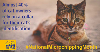 Forty per cent of cat owners rely on a collar for their cat's identification