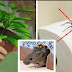 IF YOU HAVE THIS PLANT IN YOUR HOUSE, YOU WILL NEVER SEE MICE, SPIDERS AND OTHER INSECTS AGAIN !