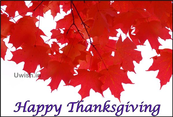 Happy Thanksgiving wishes and greetings with red leaves