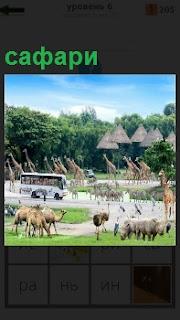 Большое количество зверей для сафари находится на небольшом участке местности