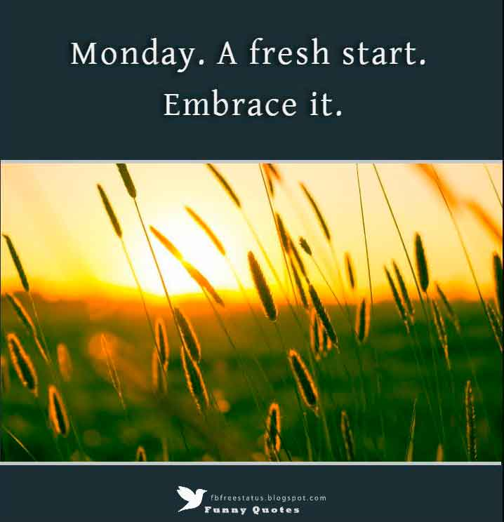 Monday. A fresh start. Embrace it.