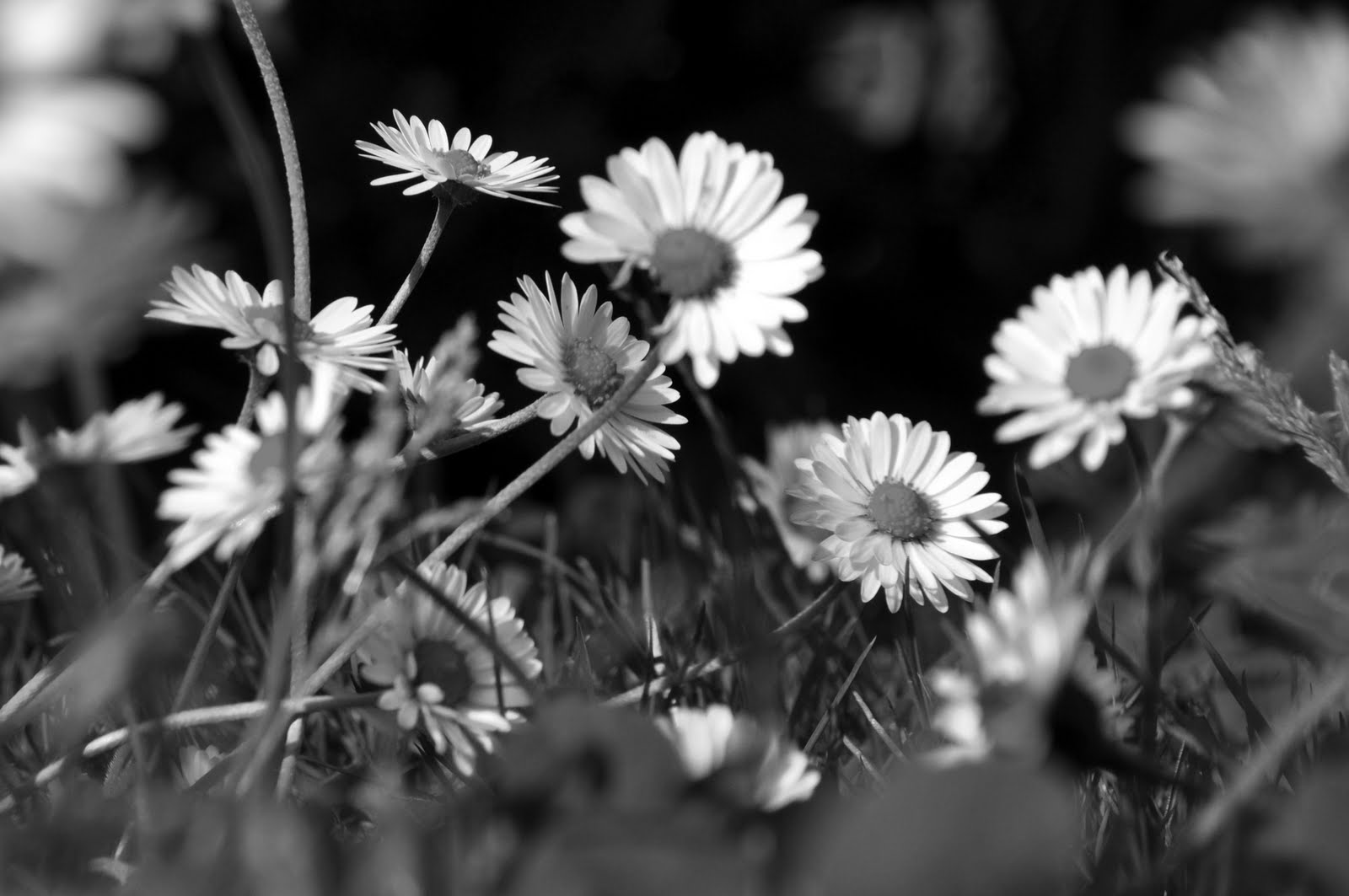 Black and White, Floral Photography - Personal Investigation.