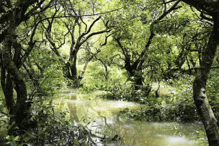 নিঝুমপুরের দীপ ।। শুভব্রত মন্ডল