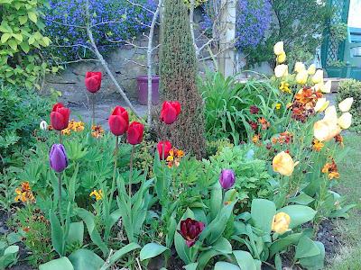 Tulips in garden border Green Fingered Blog