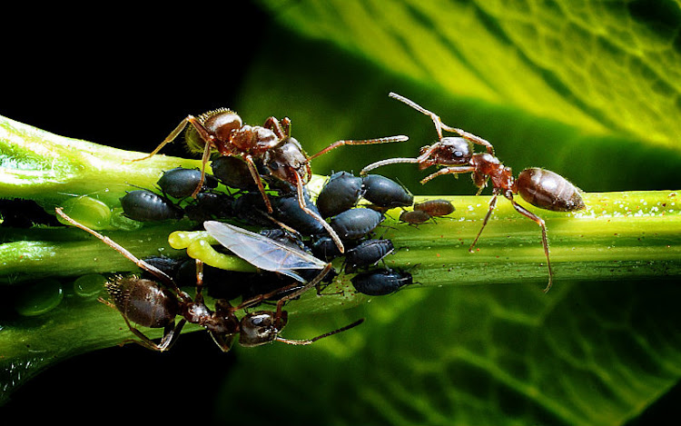 Comunicación en Insectos