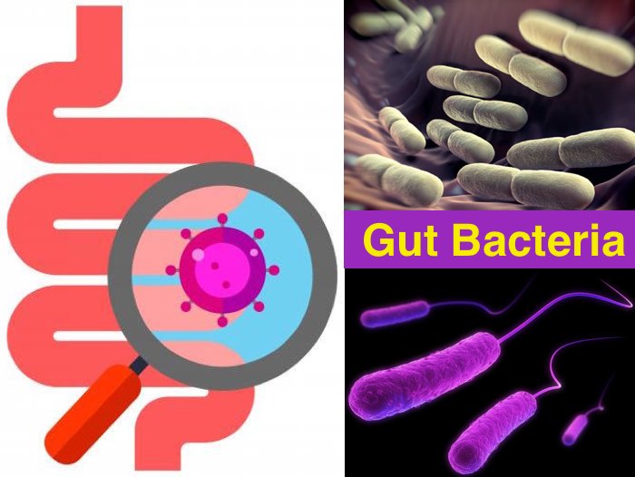 gut bacteria Gut bacteria affect everything from obesity to psychology new studies help lay it out.
