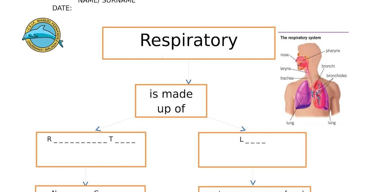 Amazing Science Ceip Manuel Fernndez Churriana Ud 1 Respiratory